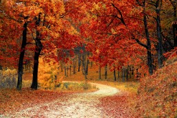 Autumn Woods Path Image
